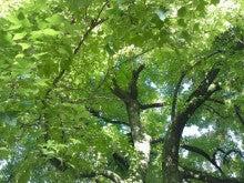 ふくたのログブー-府立植物園⑤