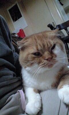 スコ猫くまきち日和+-101110_0138~0001.jpg