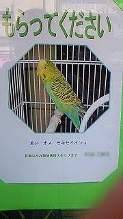ようこそ!とりみカフェ!!~鳥の写真や鳥カフェでの出来事~