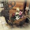 アポアの園芸教室 今月はクリスマス特別 トナカイさんだよの画像