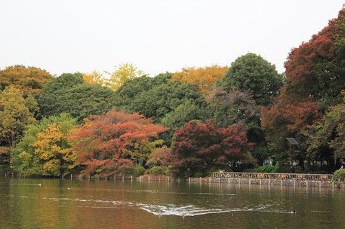 コトホギニッキ-善福寺公園-01