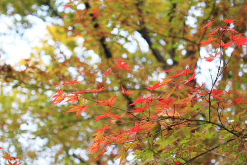 コトホギニッキ-善福寺公園-04