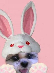 $愛犬そっくりな羊毛ふわふわワンちゃん お花とコラボ           ~アトリエ 花だより~
