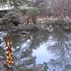 竹灯籠まつり 昨年の様子の画像