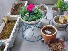 suigyokuのブログ-ガーデン