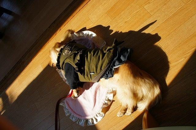 旅犬Lanileaのほほん風船記-亀島亭