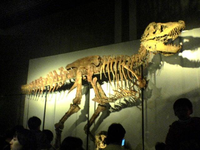 恐竜博2005のタルボサウルスの化石