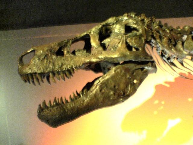 恐竜博2005のティラノサウルスのスー(Sue)の頭蓋骨の化石