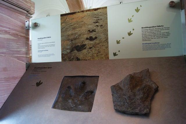 Senckenberg Naturmuseum ゼンケンベルグ自然博物館、恐竜の足跡