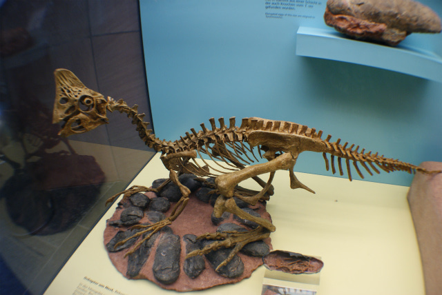 ゼンケンベルグ自然博物館の小型恐竜と卵