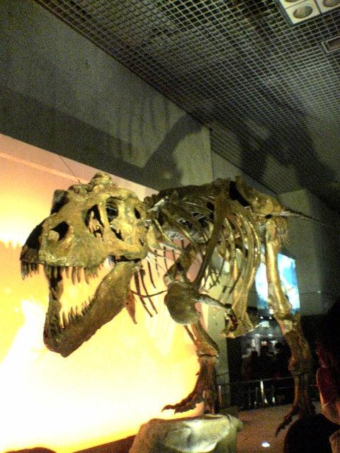恐竜博2005のティラノサウルスのスー(Sue)の化石