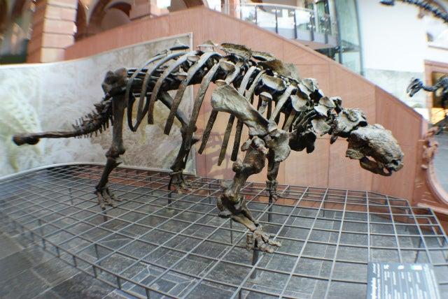 ゼンケンベルグ自然博物館、エウオプロケファルスの化石