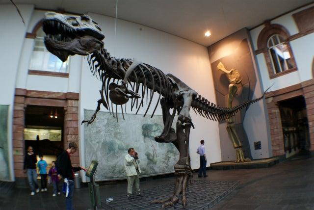 Senckenberg Naturmuseum ゼンケンベルグ自然博物館のティラノサウルス T-REX、スー(Sue)の化石