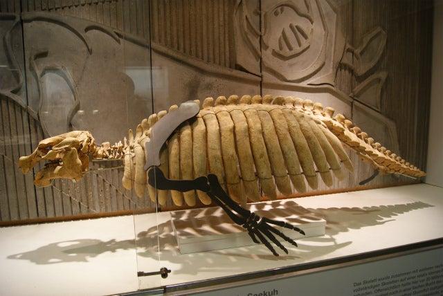 ゼンケンベルグ自然博物館の亀の化石