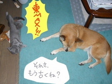 丸猫本舗-続・東MAX