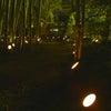 韮山竹灯籠まつり(写真)の画像