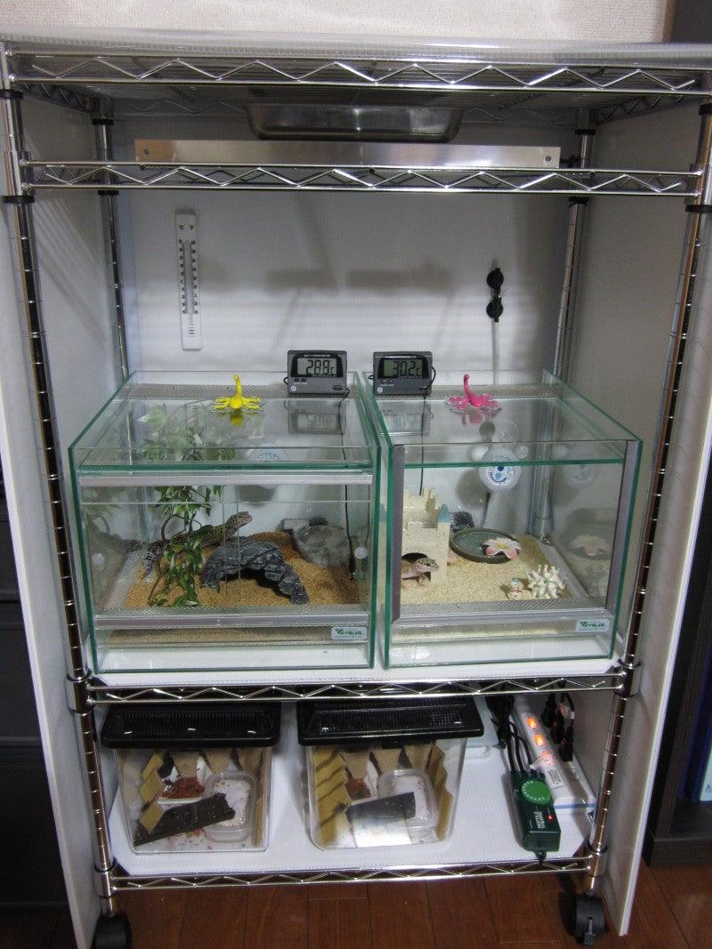 温室 自作 爬虫類