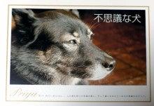 不思議な犬:プリアのブログ