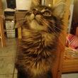 Hyper Kitt…