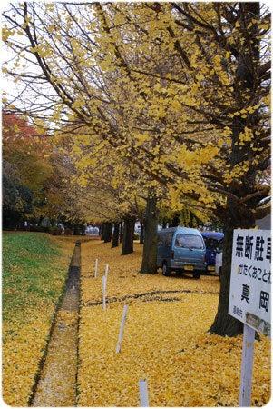 ひばらさんの栃木探訪-ひばらさんの栃木探訪 真岡市 産業祭