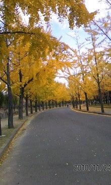 いっくんの樹-101124_1402~02.jpg