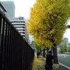 いちょう並木。の画像