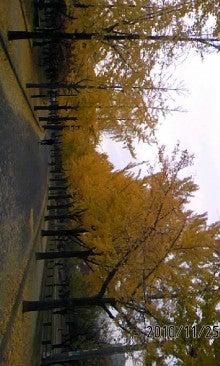 いっくんの樹-101125_1521~01.jpg