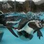 動物園で野外デジカメ…