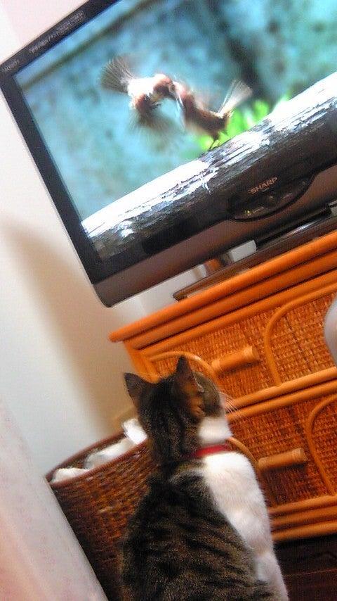 くぅちゃんだって猫である。ニャ(=^・^=) ♪-tori2