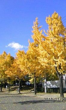 いっくんの樹-101127_1145~01.jpg