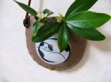 ヒロアミーの日記-沈丁花
