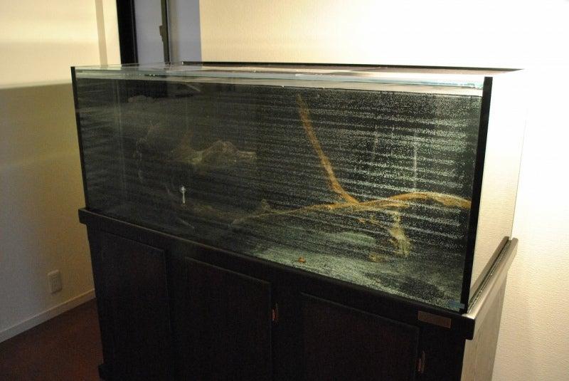フミトのブログ-流木 オーバーフロー水槽