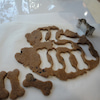 ワンワンヤムヤムクッキー!!の画像