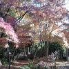 蓮華寺 京都市 紅葉の画像