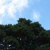 晴天の画像