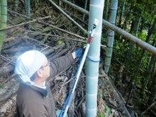 竹林戦隊のブログ