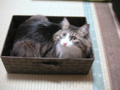 $猫好き整体師の日常-2010.12.5 ミント