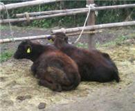 宮崎県繁殖農家のブログ