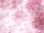$時和春香ブログ ~時を和ます春のかほりno.2~