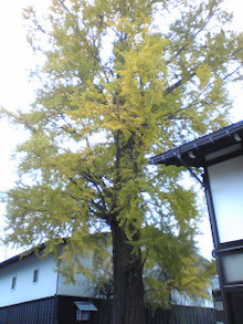 https://stat.ameba.jp/user_images/20101209/08/maichihciam549/2f/5d/j/t02200293_0240032010907021270.jpg