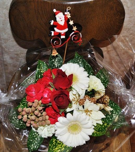 茶々吉とデジ一 のんびり旅-2010/12/1クリスマス花2