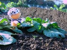 愛宕ふれあい農園モニターブログ