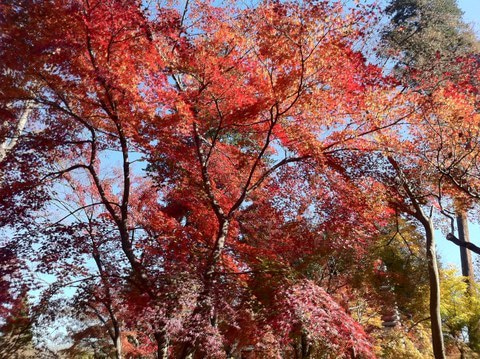 Narisawaブログ 改め エスワイ ブログ