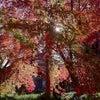 観音寺の紅葉の画像