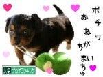 進め!たまちゃんず☆~夫婦地球探検記~-くぅ応援ポチッ