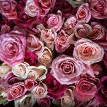 贅沢な薔薇のお風呂~…