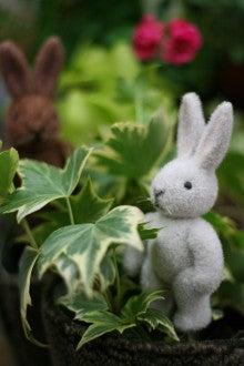 はなことばのブログ-かわいいウサギ!