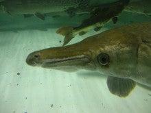 牙魚専門店キングコブラのブログ