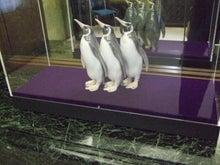アートテラー・とに~の【ここにしかない美術室】-置物≪三羽揃ペリカン(ペンギン)≫
