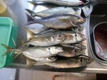 磯人の釣り釣れ報告-オール